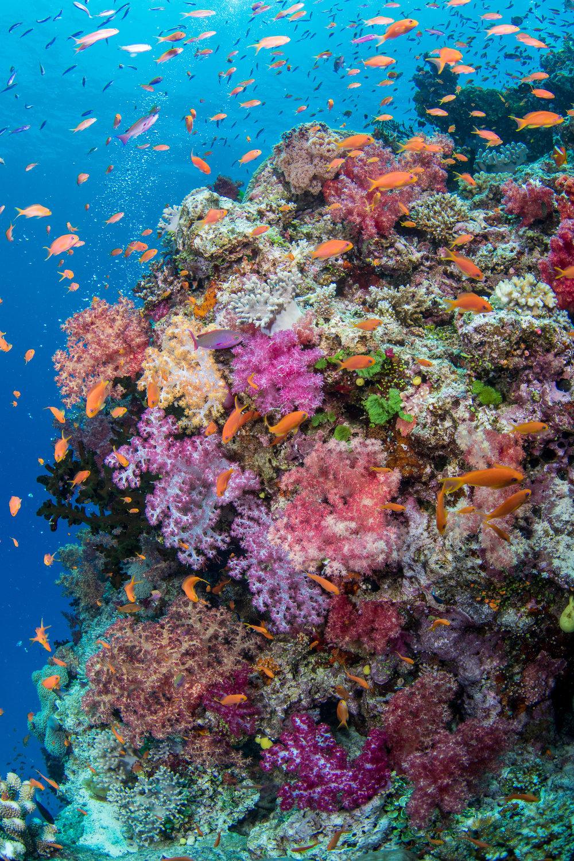 Fiji-Sep16-D500-1010.jpg