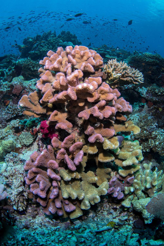 Fiji-Sep16-D500-1563.jpg