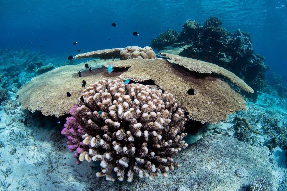 Fiji-Sep16-D500-1737.jpg