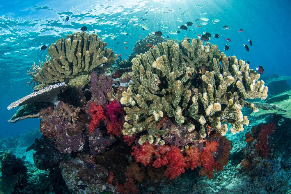 Fiji-Sep16-D500-1770.jpg