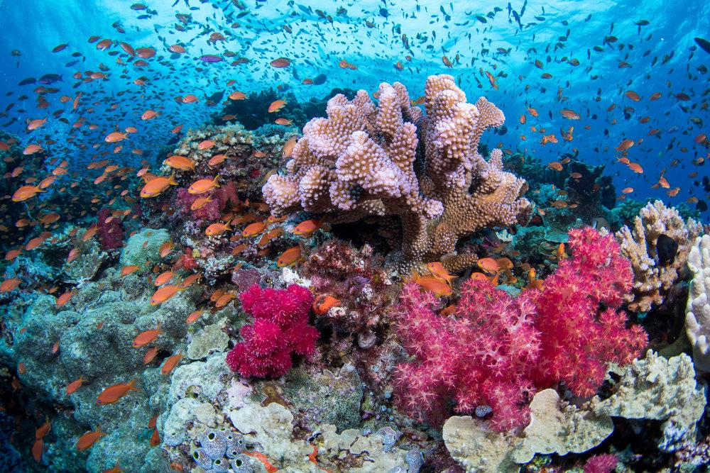 Fiji-Sep16-D500-2443.jpg