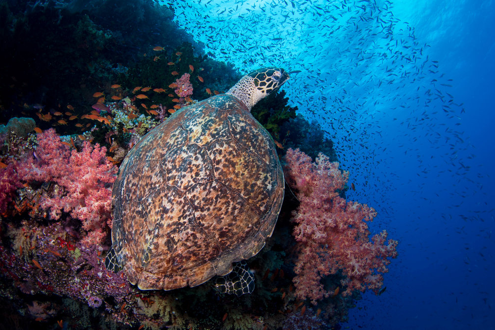 Fiji-Sep16-D500-2238.jpg