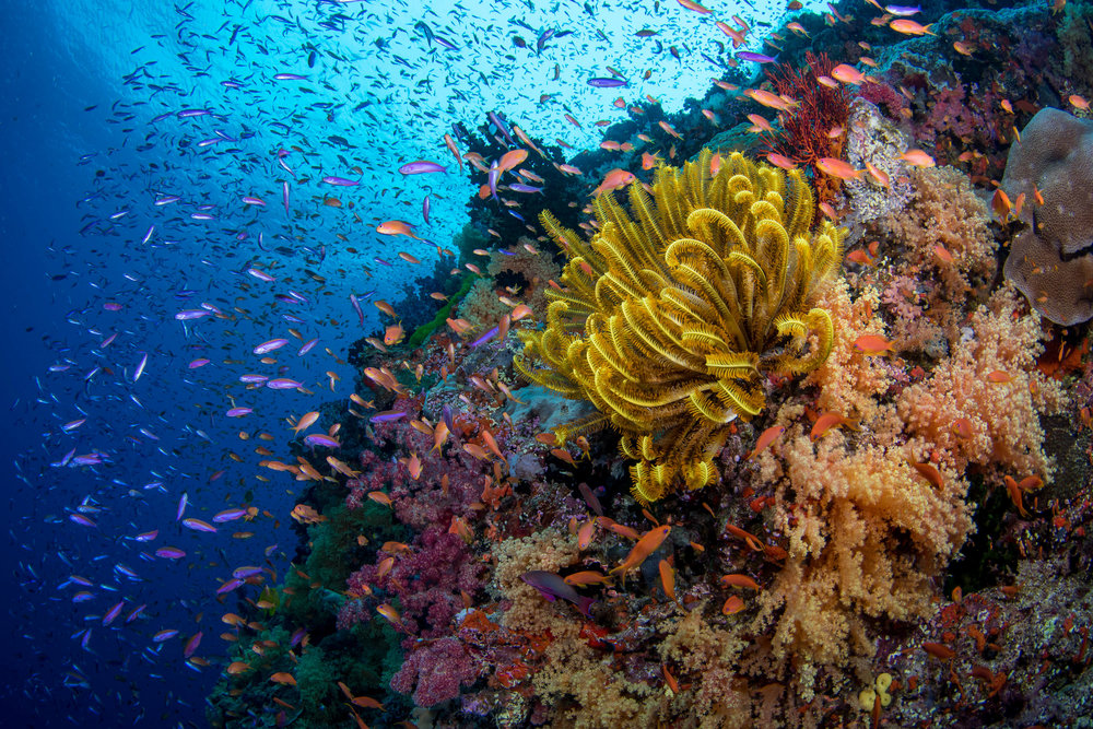 Fiji-Sep16-D500-2955.jpg