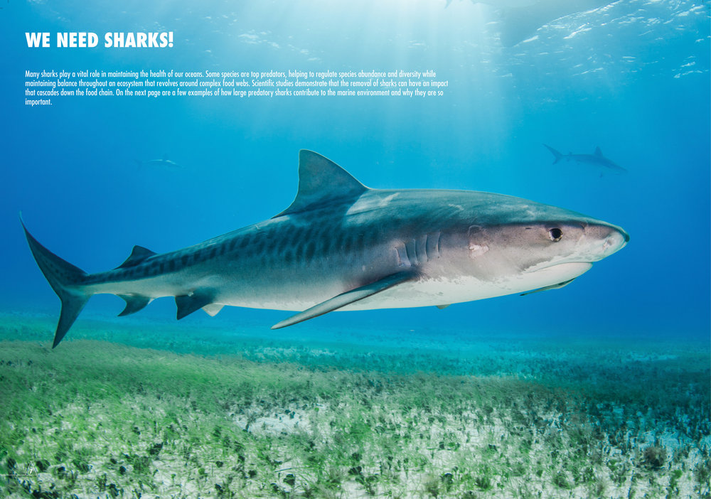 Shark_Pag07_b.jpg