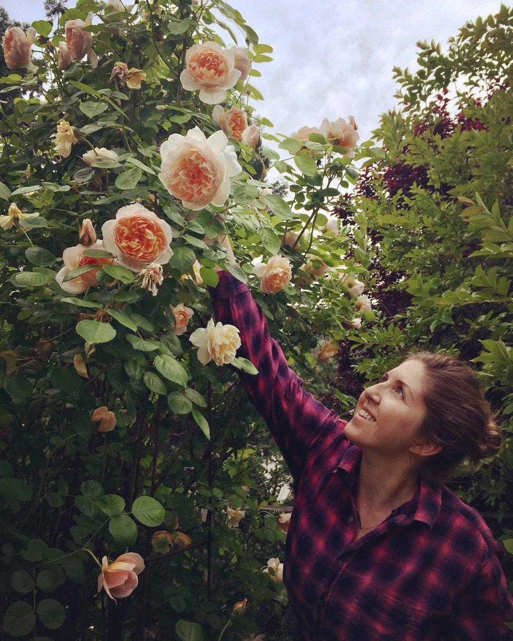 Marisa- Revel Floral