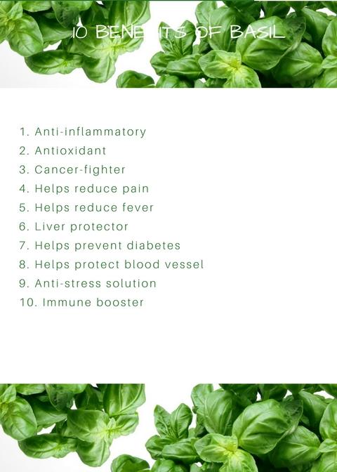 10 Benefits of Basil