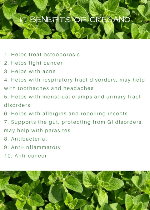 10 Benefits of Oregano