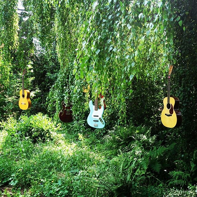 Into the woods tour 2018 😂#indiansummer #fender #eastman #guitars #musicproduction #carousels #treeoflife