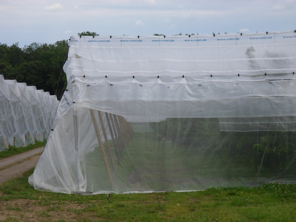 Insektnett og Voen-dekke