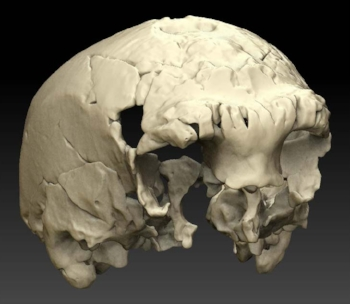 Ear Mnqa Skull.jpg