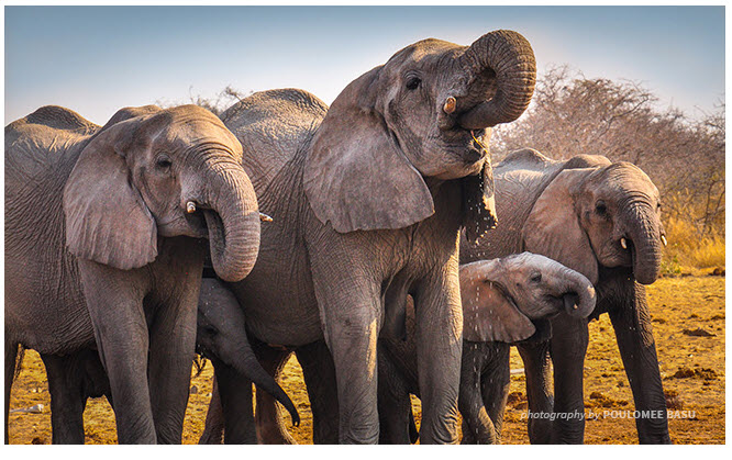 awf combat elephant poaching.jpg