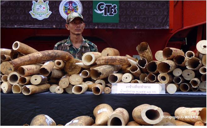 asia ivory 2.jpg