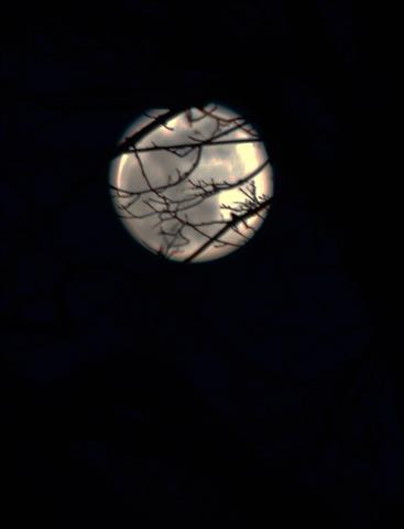 silver moon peeking through the trees.jpg