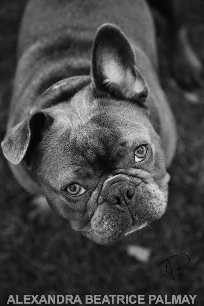 Frank: Pet Photography