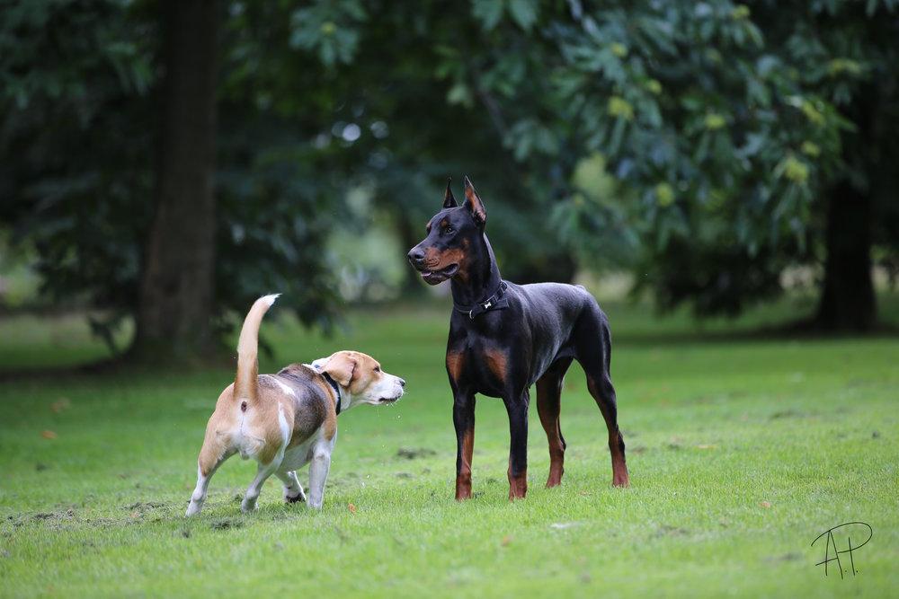 Dunder and Romeo