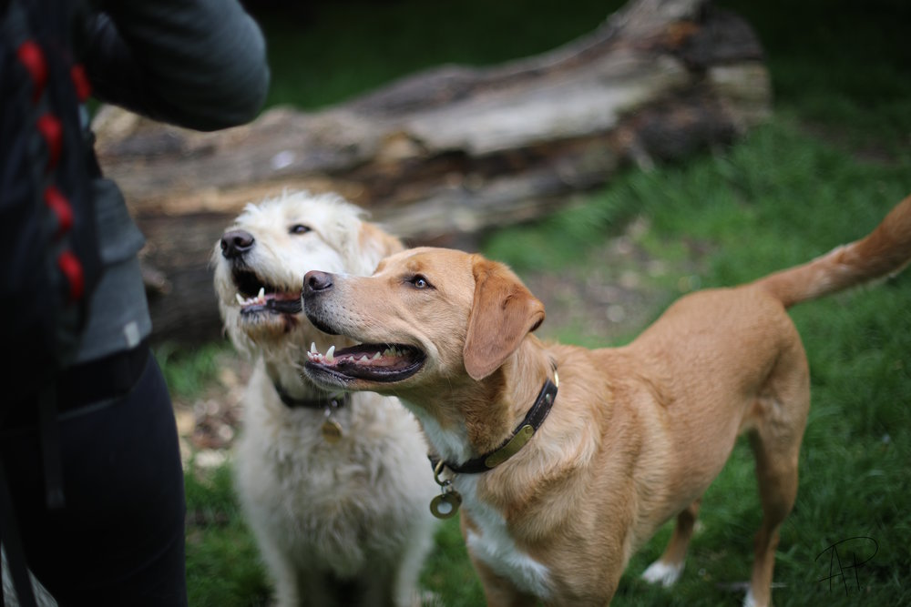 Alfie and Otis