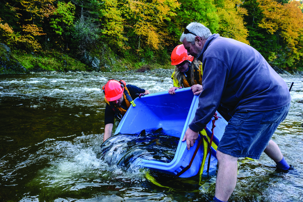 Nigel Fearon Photography -20151014 - Fundy NP Salmon Release -_NF14023.jpg