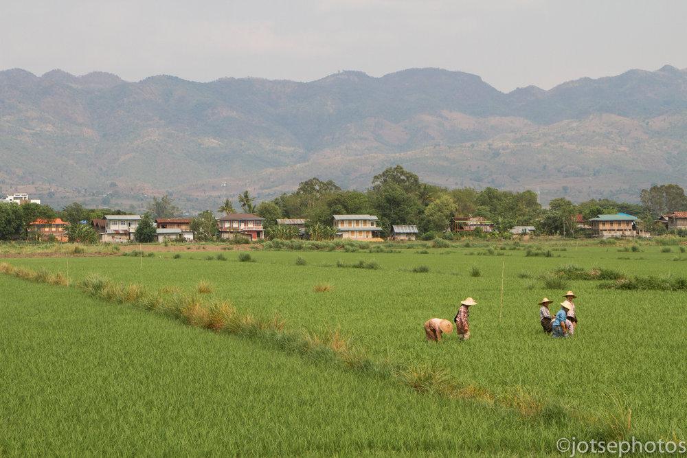 countryside-near-nyuang-shwe_26931012650_o.jpg
