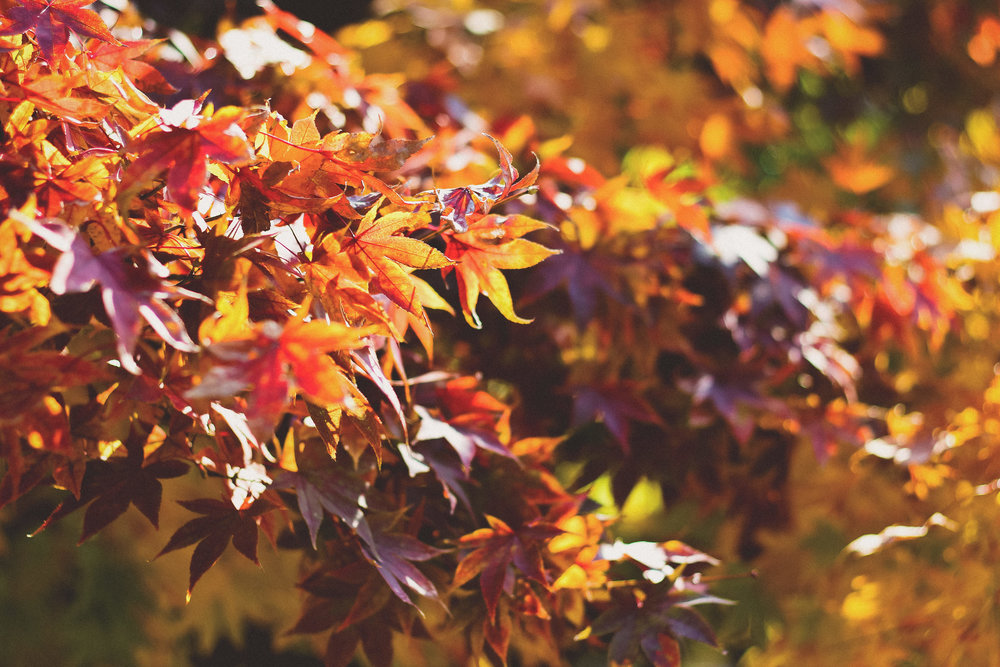 Season of mists, mellow fruitfulness and school open days. Image credit: Unsplash