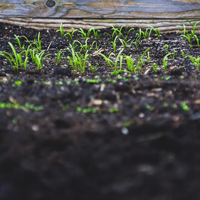 soil: /soil/ (noun) the upper layer of earth in which plants grow, a black or dark brown material typically consisting of a mixture of organic remains, clay, and rock particles.  We are so happy to do the heavy lifting of organics for businesses so that it can have new life as compost and regenerate our soil.  On #worldsoilday we're appreciative of all of our sustainability partners that work so hard to separate their organics to divert them from the landfill.  We're all working to make our world greener for the future.  Thank you! 💚♻️🌏 #compost