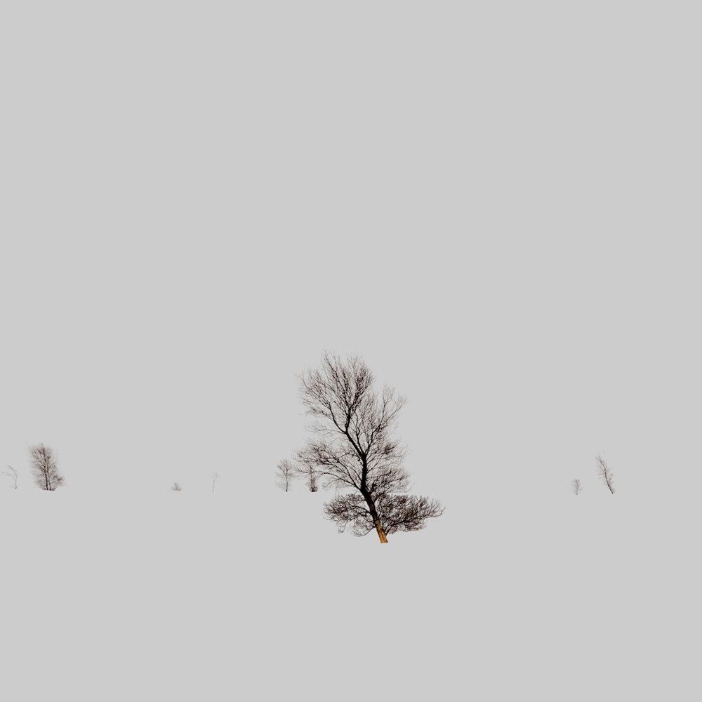 David+Langham_skinnytrees+copy.jpg