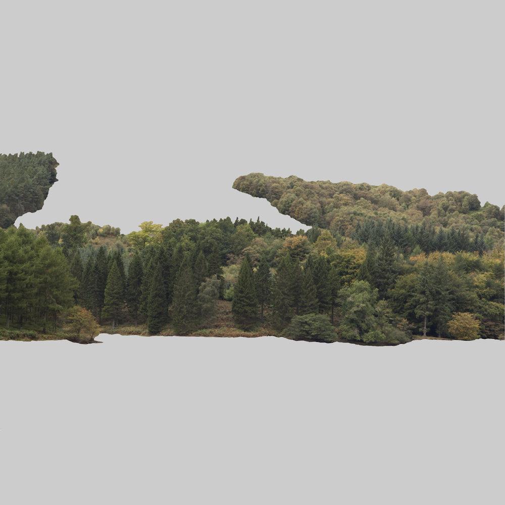 David+Langham_tree2+copy.jpg