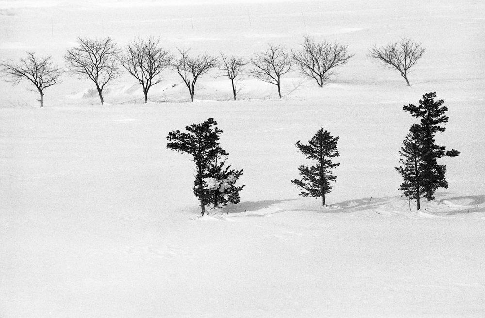 winter tree 2017(2).jpg