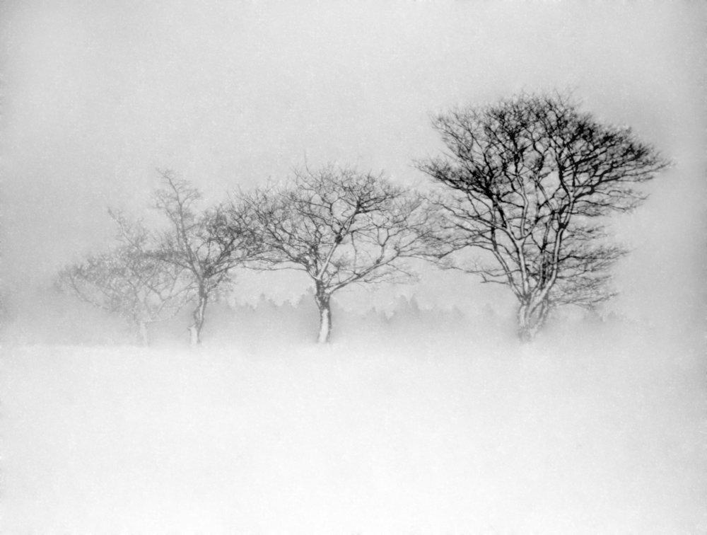 winter tree 2018(3).jpg