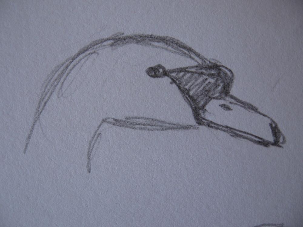 Mute swan, Derwentwater