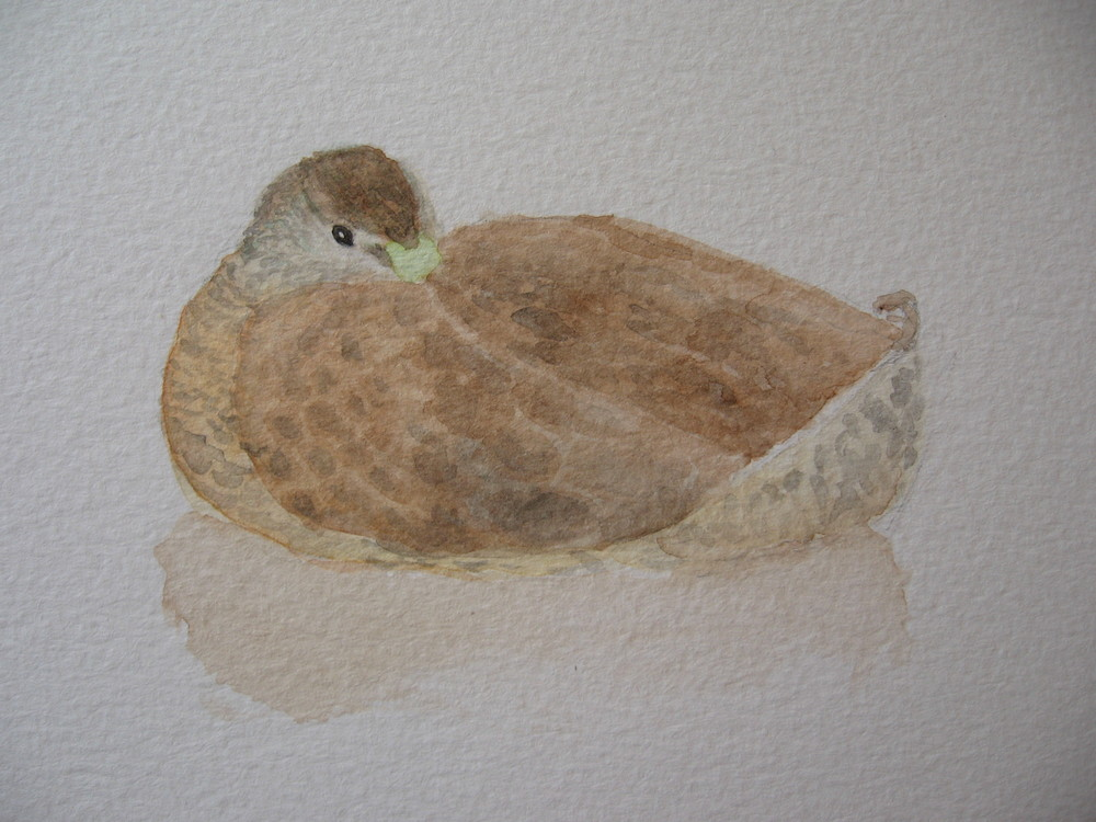 Watercolour sketch - Mallard