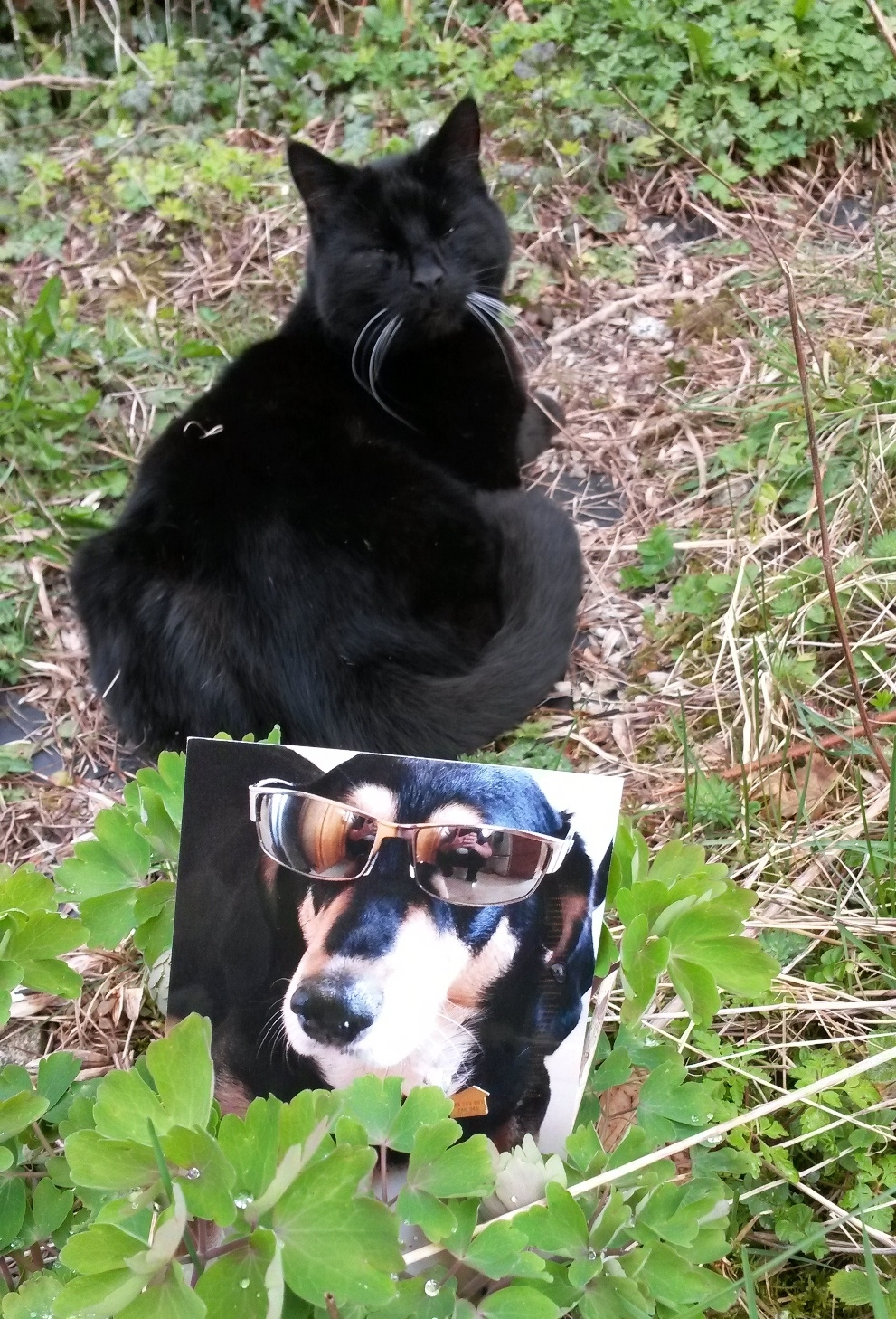 Card from Siobhan Wolf, wolftale.wordpress.com.  Next doors' cat came for a look when I was photographing the card - he doesn't look too impressed!