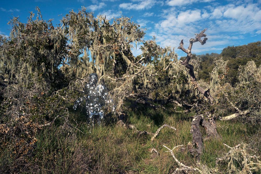 Hebert_Oscillator in Los Osos Oaks State Natural Preserve.jpg