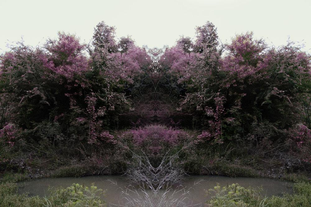 Jacob Mitchell, Blush I, archival pigment print, 24 x 36 inches