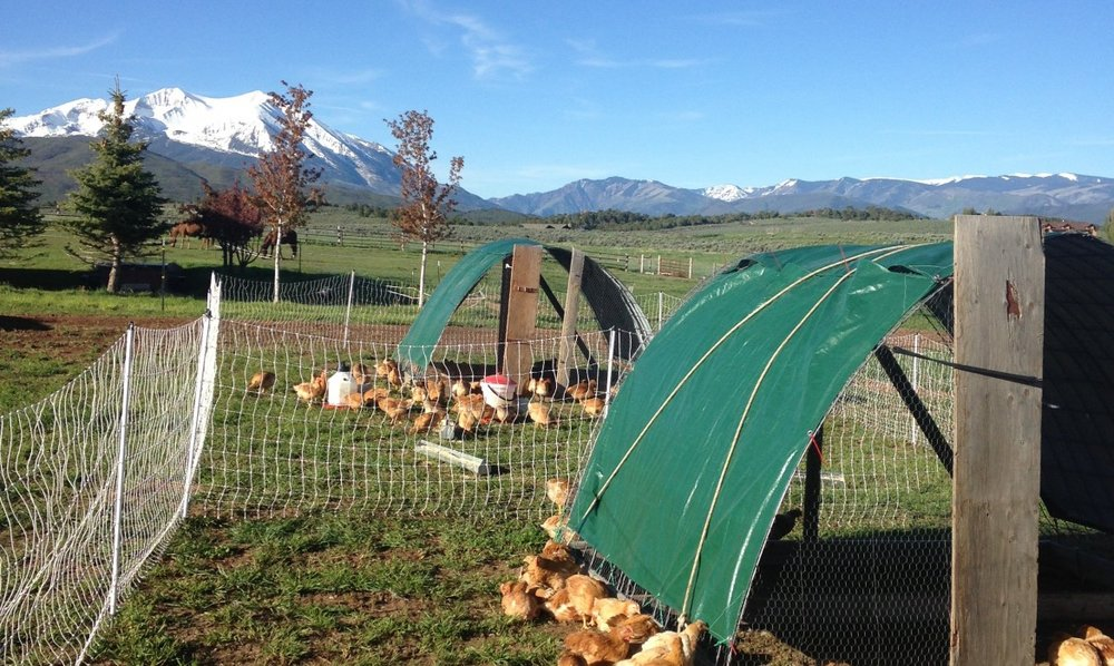 Spradley Farms Chickens