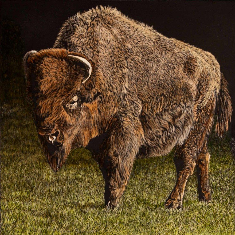Lone Bison- website.jpg
