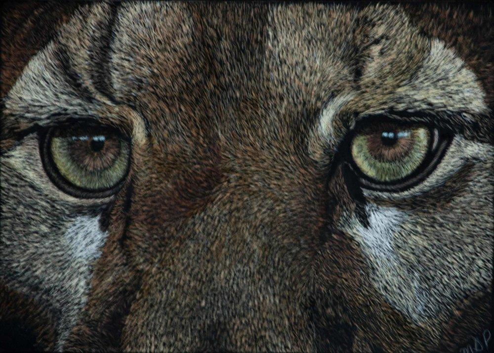 Cougar Eyes website.jpg