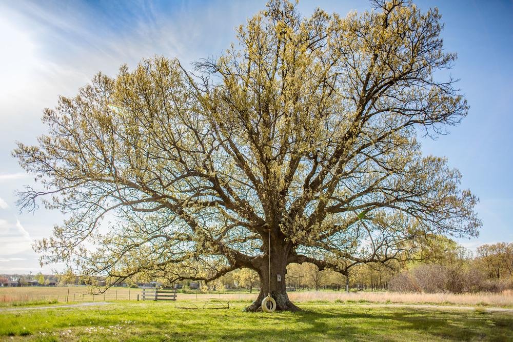 One Tree 1.jpg