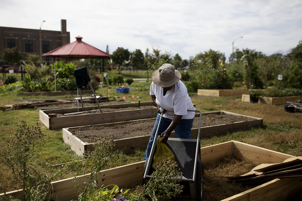 Rosie Willis preps for winter at Fresh Starts Community garden in north St. Louis. Seven years ago, Willis says the now-lush garden was full of garbage and drug paraphernalia. CAROLINA HIDALGO | ST. LOUIS PUBLIC RADIO