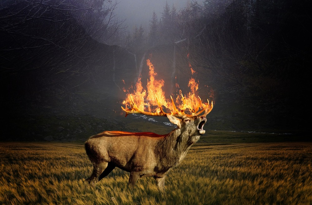 ridiculous flaming deer animal totem