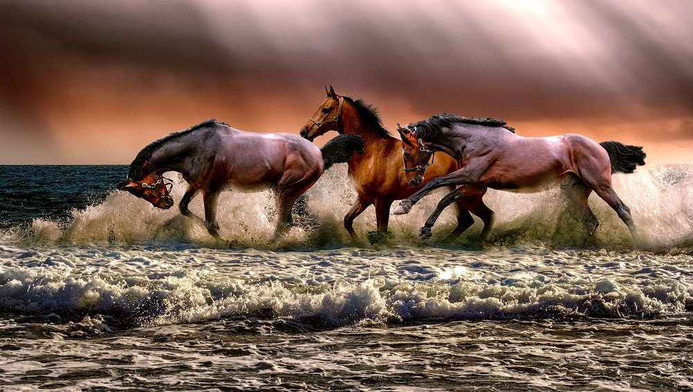four horses gallop through the waves on the beach.  The clouds behind them are purple and orange and stormy looking.  The waves look choppy and a dark green in color.  The horses are brown, wild, and enchanting.