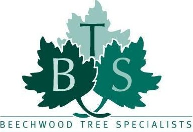 Beechwood Tree Specialists