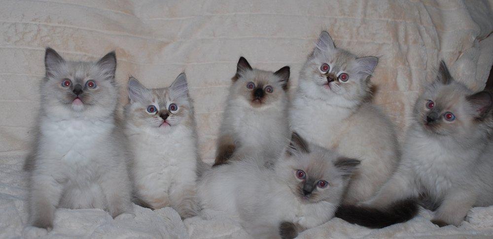 Valentine and Jamie's kittens. Born 09/07/2017.