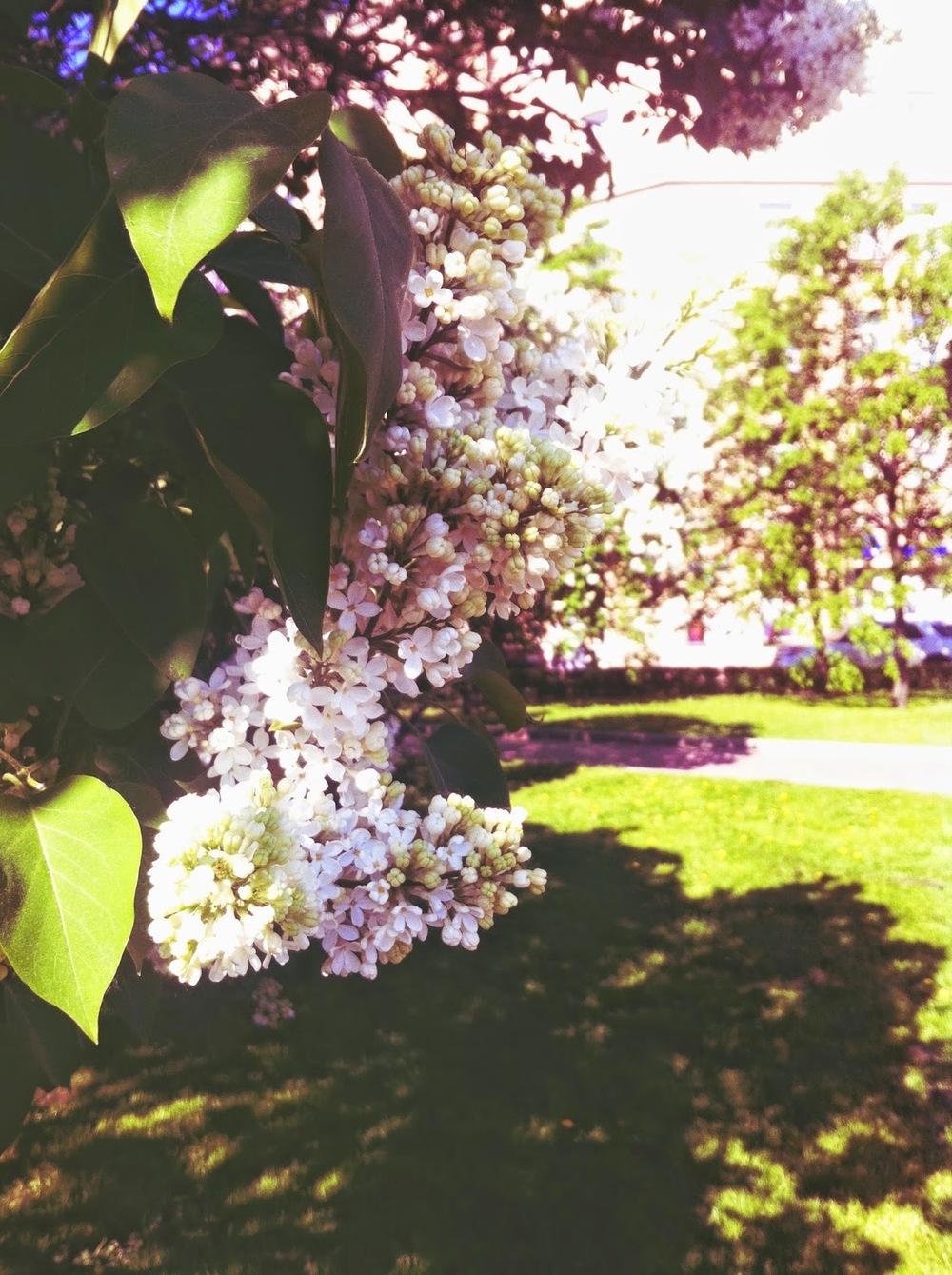 spring pete 02.jpg