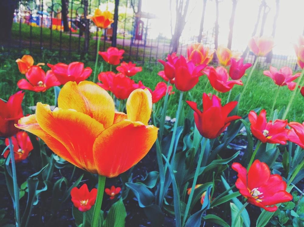 spring pete 05.jpg