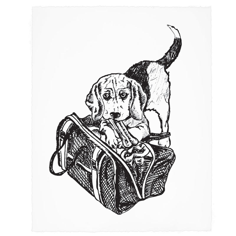 Bailey-Dog.jpg