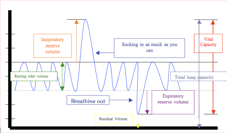 Lung Volumes  Source: https://upload.wikimedia.org/wikipedia/commons/8/8c/Vital_Capacity.png