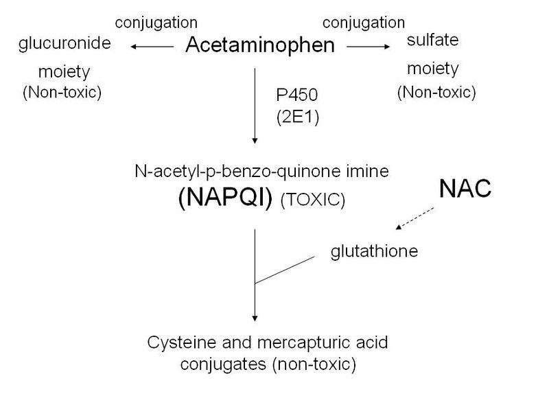 Figure 2: Acetaminophen metabolism.