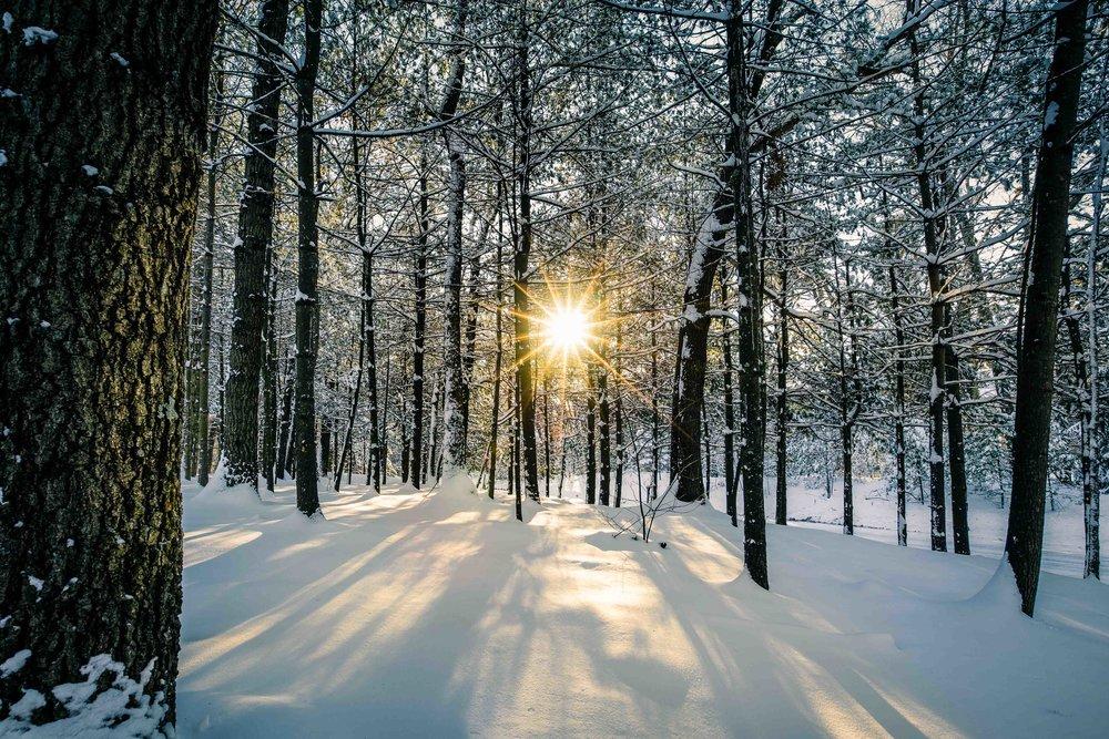 Winter scene with sun star shining through trees in Sudbury