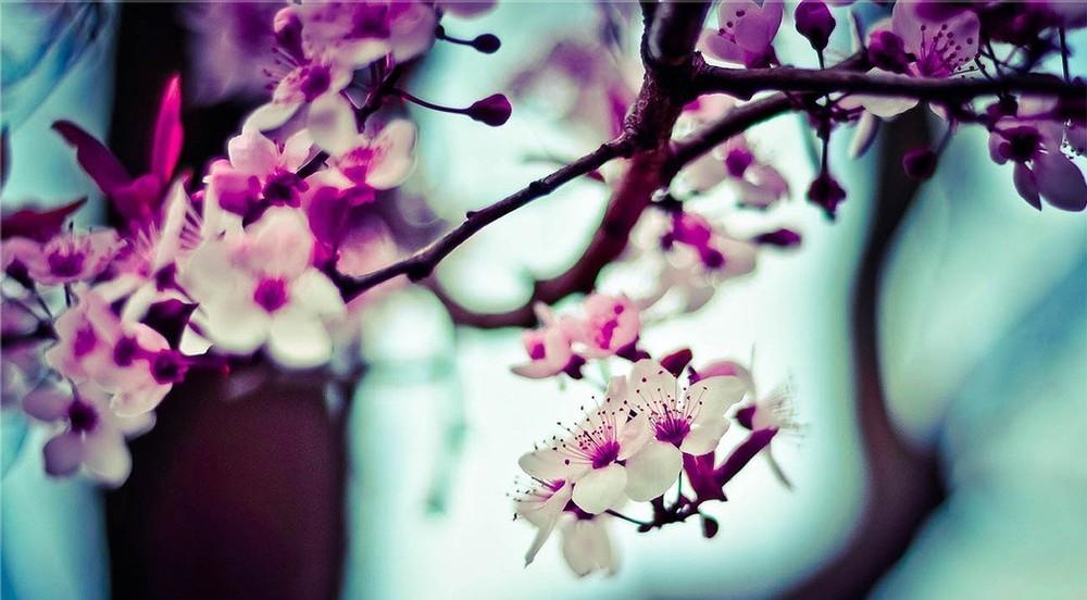 rula-sibai-pink-flowers-e1433877795413.jpg