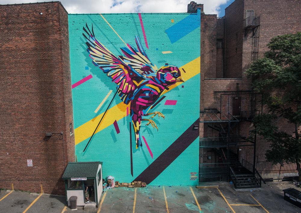Bird #6 // Arlin